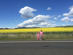 Canola Fields - rural NSW, Australia